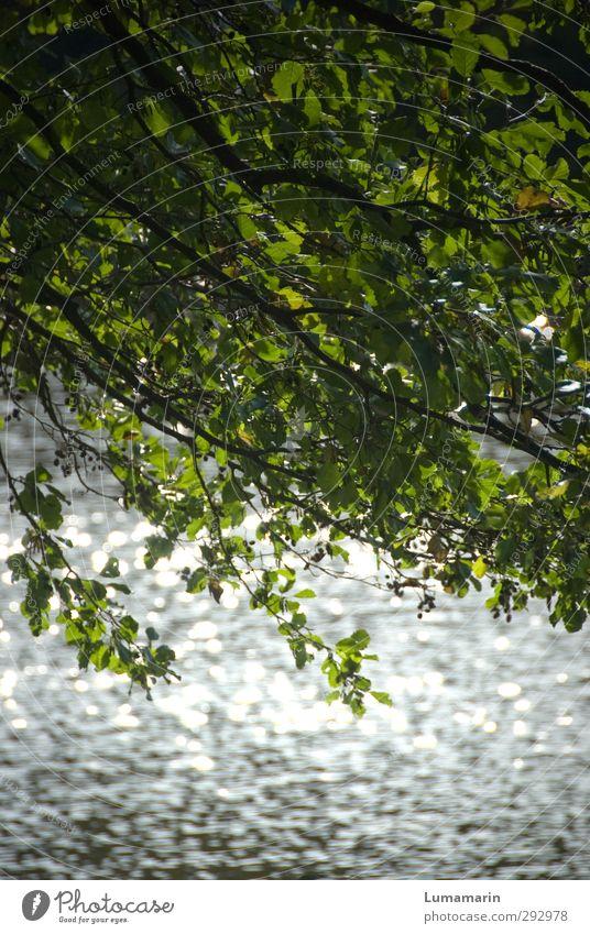 Biosphäre Umwelt Natur Pflanze Urelemente Wasser Sonnenlicht Sommer Klima Schönes Wetter Baum Wellen Küste See Gesundheit glänzend natürlich positiv Sauberkeit