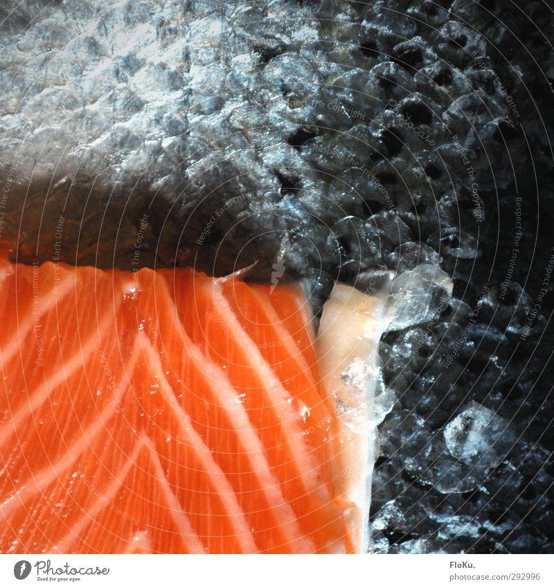 Sushi Factory Lebensmittel Fisch Ernährung Mittagessen Asiatische Küche Gesunde Ernährung Totes Tier orange rot Lachsfilet Schuppen Fischgericht schuppig Rest