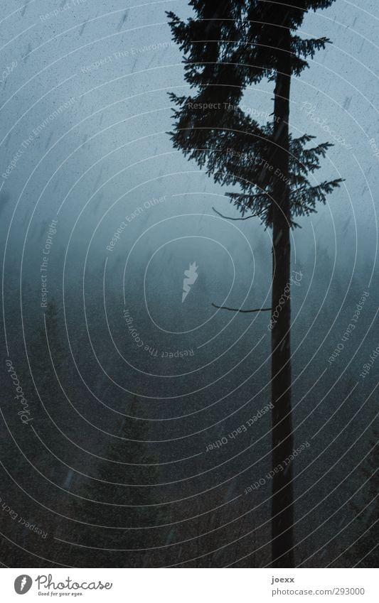 Vorstand Umwelt Landschaft Wolken Winter Klima schlechtes Wetter Schnee Schneefall Baum Wald Berge u. Gebirge dunkel kalt blau schwarz skurril Schneetreiben