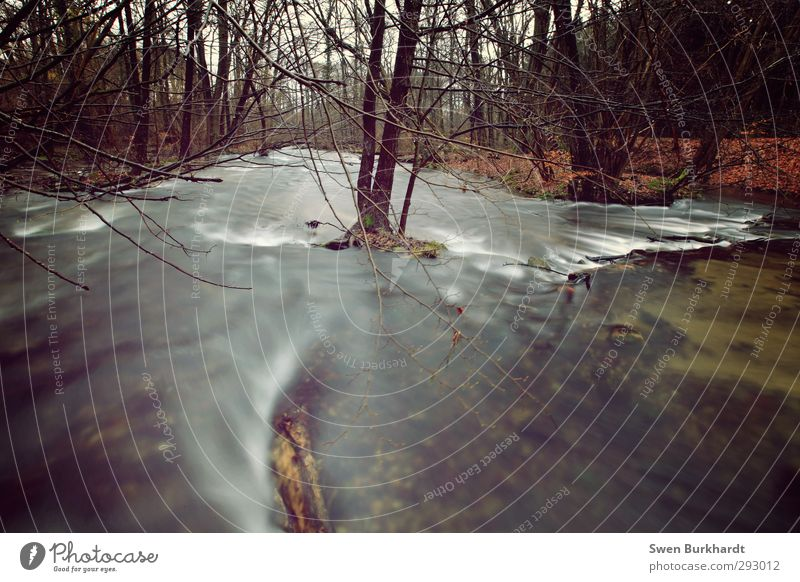 Der Fluß der Zeit ist nicht aufzuhalten! Natur grün Wasser Pflanze Baum Blatt Landschaft Winter ruhig Erholung Wald Umwelt Herbst Freiheit Sand braun