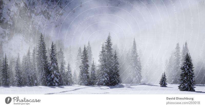Wenn der Schnee kocht Ferien & Urlaub & Reisen blau weiß Baum Landschaft schwarz Winter Wald Berge u. Gebirge Eis Nebel wandern Schönes Wetter Frost Alpen