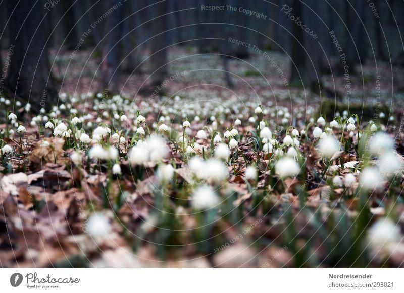 Märzenbecher Leben harmonisch Sinnesorgane Erholung ruhig Duft Ausflug Natur Landschaft Pflanze Frühling Wald Wachstum Freundlichkeit Frühlingsgefühle