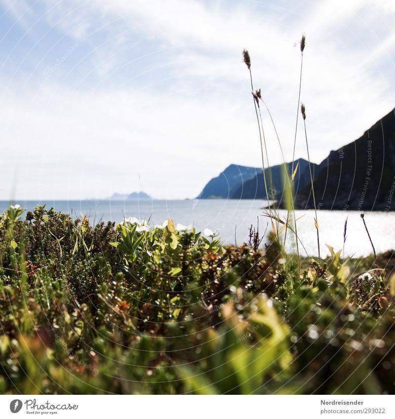 Sommer auf den Lofoten.... Natur Ferien & Urlaub & Reisen Sommer Pflanze Meer ruhig Erholung Ferne Berge u. Gebirge Leben Frühling Freiheit Küste Insel frisch Schönes Wetter