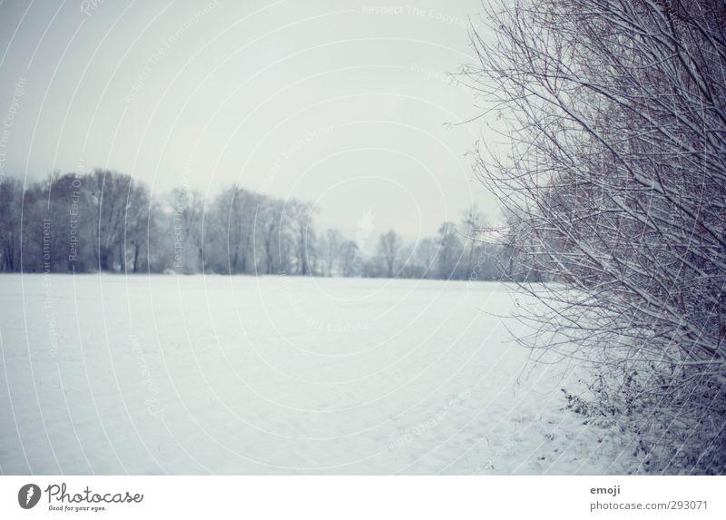 snoWhite Natur blau weiß Landschaft Winter Umwelt kalt Schnee Feld Sträucher