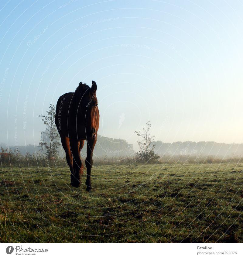 HOT LOVE | Romantischer Ausritt gefällig? Umwelt Natur Pflanze Tier Urelemente Erde Himmel Wolkenloser Himmel Herbst Nebel Gras Sträucher Wiese Feld Nutztier