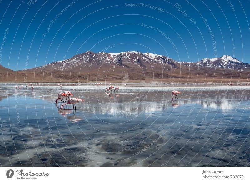 Crockett & Tubbs Berge u. Gebirge Vulkan See Flamingo Tiergruppe einfach frei Freundlichkeit frisch schön blau Umwelt Bolivien Eis gefroren Wasseroberfläche
