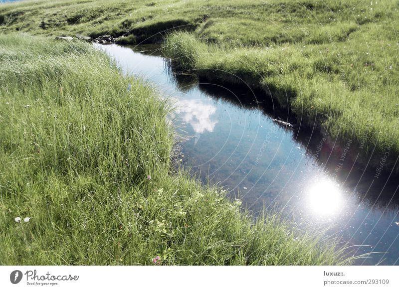 Wasser Trinkwasser Umwelt Natur Alpen Moor Sumpf Bach frisch Sauberkeit Quelle Wildbach Allgemeingut Grundversorgung Farbfoto