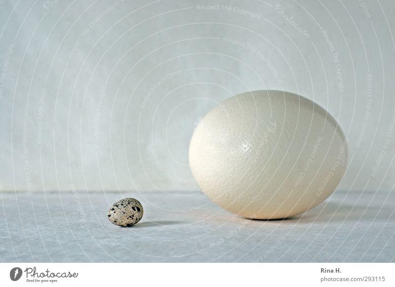 Ei ei (600 ) Ernährung groß hell klein rund Gegenüberstellung Straußenei fruchtbar Beginn Wachtelei feminin Symbole & Metaphern harmonisch Verschiedenheit