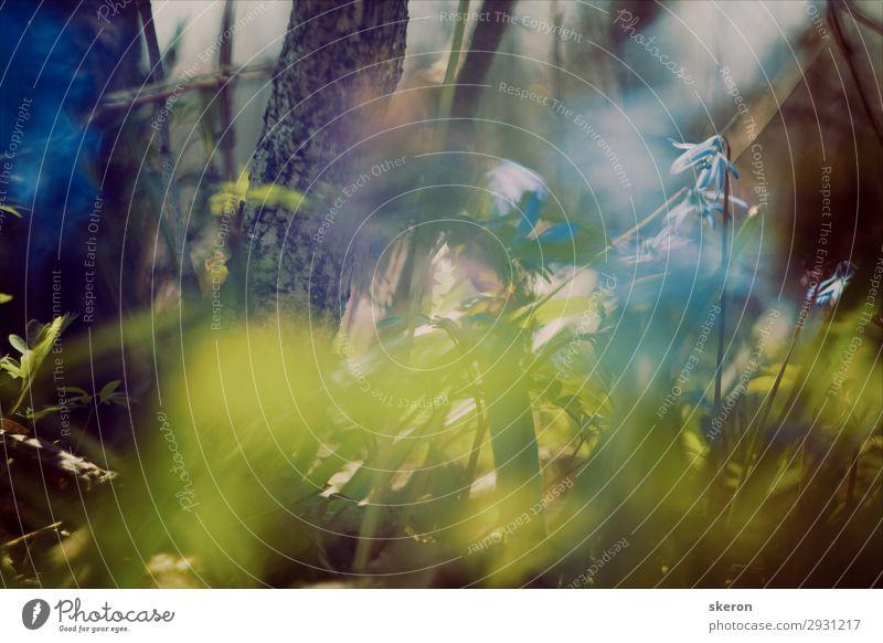 Schneeglöckchen im Frühlingswald Lifestyle Freizeit & Hobby Ferien & Urlaub & Reisen Tourismus Ausflug Abenteuer Ferne Freiheit Umwelt Natur Pflanze Sommer Baum