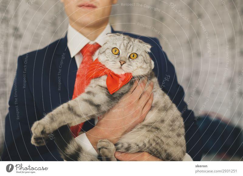 der Bräutigam am Hochzeitstag, der eine Katze hält. Lifestyle Freizeit & Hobby Entertainment Feste & Feiern Kindererziehung Bildung Arbeit & Erwerbstätigkeit