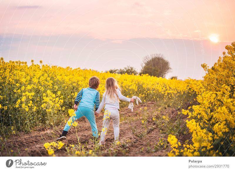 Kinder gehen auf den Sonnenuntergang zu. Lifestyle schön Freiheit Sommer Junge Hand Natur Landschaft Himmel Blume Blüte Wiese Straße schlafen träumen Wachstum