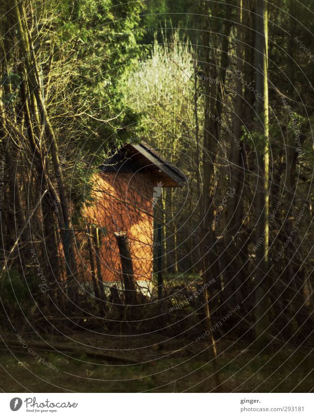 Das Versteck Natur grün Pflanze Baum Haus dunkel Wärme Herbst braun orange wild Schönes Wetter Sträucher Dach Zaun Hütte