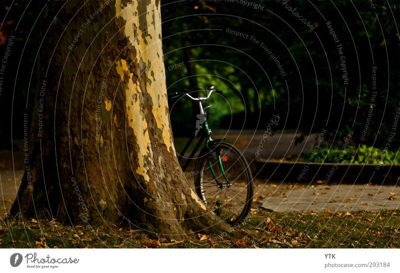 Angelehnt Natur Ferien & Urlaub & Reisen Sommer Pflanze Baum Freude Tier ruhig Erholung Umwelt Sport Herbst Gras Freiheit Park Wetter