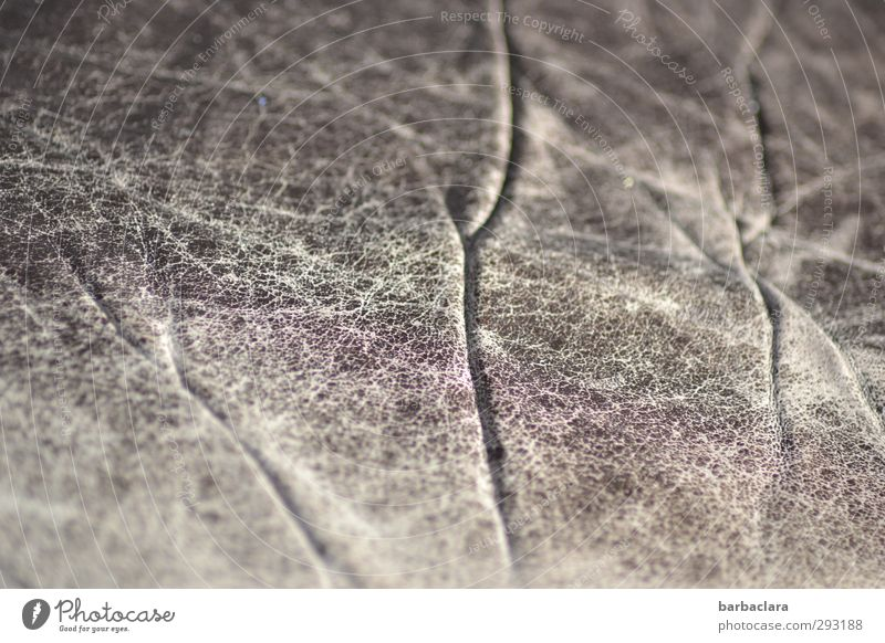 Antiquitäten | alte Lederhaut alt Leben grau Stil braun Linie Häusliches Leben Wandel & Veränderung Vergänglichkeit Netzwerk dünn Möbel Verfall Sofa bizarr Nostalgie