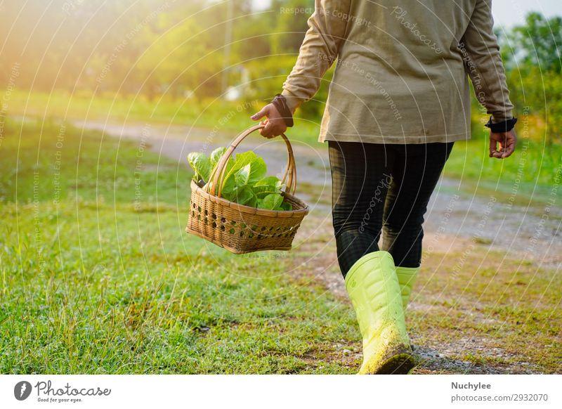 Landwirt pflückt frisches Bio-Gemüse im Korb Kräuter & Gewürze Lifestyle schön Sommer Garten Gartenarbeit Mensch Frau Erwachsene Natur Pflanze Gras natürlich