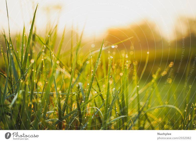Schönes grünes Gras am Morgen mit Taufwasser schön Sommer Sonne Garten Tapete Gartenarbeit Umwelt Natur Landschaft Pflanze Frühling Wärme Baum Blatt Wiese