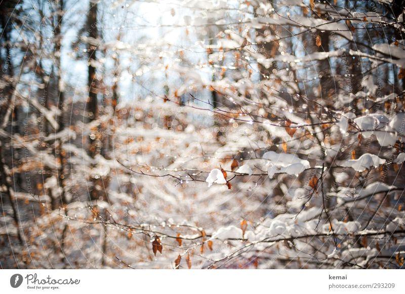 Schneesonnentag Umwelt Natur Landschaft Pflanze Wasser Wassertropfen Sonne Sonnenlicht Winter Schönes Wetter Eis Frost Baum Sträucher Blatt Zweig Ast Wald hell
