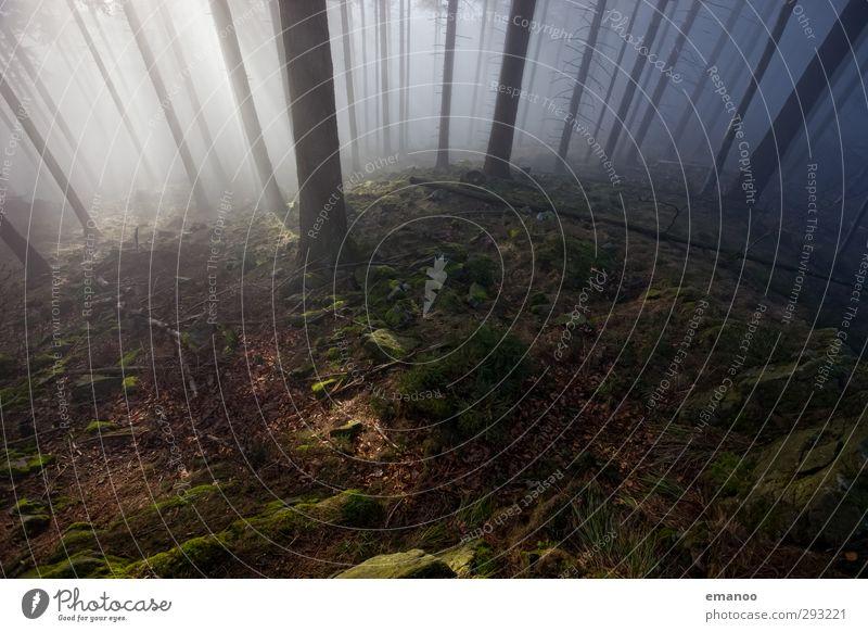 dark forest Ferien & Urlaub & Reisen Berge u. Gebirge wandern Umwelt Natur Landschaft Pflanze Wasser Klima Wetter Nebel Baum Moos Wald Urwald Hügel Felsen