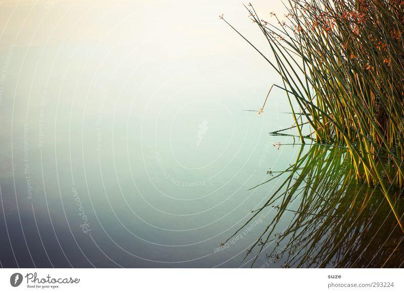 Seegräser harmonisch ruhig Meditation Sommer Umwelt Natur Landschaft Urelemente Wasser Horizont Schönes Wetter Gras Seeufer authentisch dunkel natürlich grün