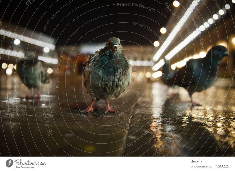 Venice City Rockers Ferien & Urlaub & Reisen Stadt Tier kalt Vogel Regen Wetter dreckig Wildtier Tourismus nass Tiergruppe Italien Wahrzeichen Stadtzentrum