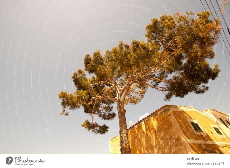 Noch 6 Wochen bis zur Sommerzeit Luft Wolkenloser Himmel Schönes Wetter Wärme Baum Fischerdorf Kleinstadt Haus Einfamilienhaus Bauwerk Gebäude Mauer Wand