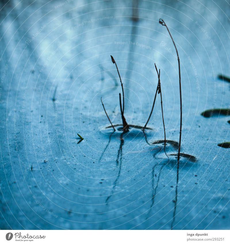 Blaues Fenster Natur blau Wasser Pflanze Landschaft Winter Umwelt kalt Gras See Eis Urelemente Frost gefroren Jahreszeiten Stengel