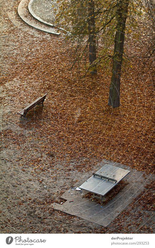 Lebenslinie endet Natur Pflanze Einsamkeit Landschaft ruhig Herbst Gefühle Berlin Stimmung Park Treppe Schönes Wetter Sehnsucht Gelassenheit Schmerz