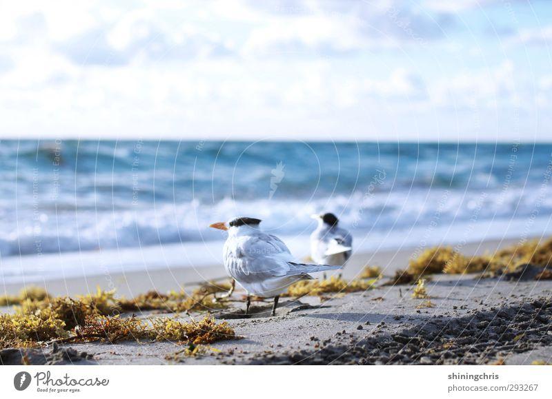 getrennte wege Ferien & Urlaub & Reisen Tourismus Sommerurlaub Strand Meer Wellen Natur Küste Tier Vogel Möwe 2 Tiergruppe Blick sitzen Ferne frei blau gelb