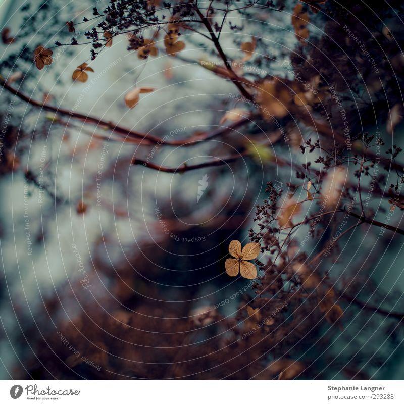 Stern Natur blau Pflanze Einsamkeit Blatt schwarz dunkel Herbst grau Blüte Garten braun träumen Stimmung Park gold