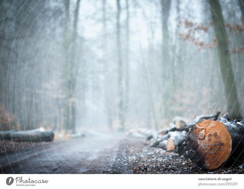 in the forest Natur weiß Pflanze Einsamkeit Blume Winter Wald Umwelt kalt Herbst Traurigkeit grau hell träumen orange Nebel