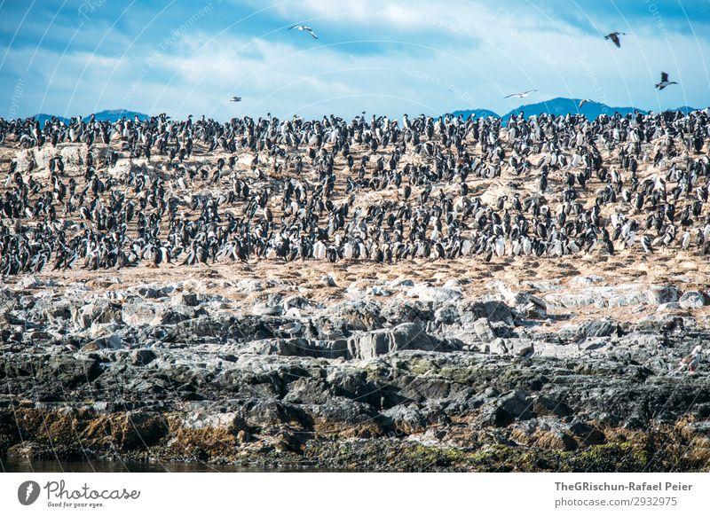 kormorane Himmel Natur Wasser weiß Meer Tier Berge u. Gebirge schwarz Umwelt Familie & Verwandtschaft Vogel Felsen fliegen Tiergruppe Schwimmsport silber
