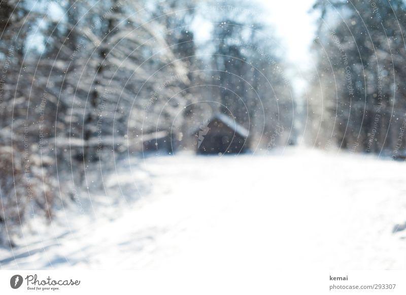 Eis in der Luft Umwelt Natur Landschaft Winter Schönes Wetter Frost Schnee Schneefall Baum Nutzpflanze Wildpflanze Wald Hütte Wege & Pfade hell kalt ruhig