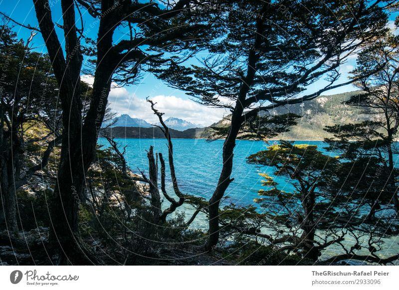 Ushuaia NP Umwelt Natur Landschaft blau schwarz Küste Berge u. Gebirge Wald Baum Wolken wandern Meer Meerwasser Südamerika Patagonien Reisefotografie entdecken