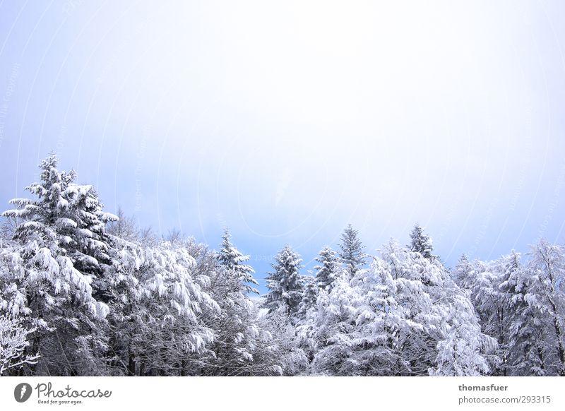 Wintertraum Himmel Natur blau Ferien & Urlaub & Reisen schön weiß Baum Landschaft Wald Umwelt Berge u. Gebirge kalt Schnee hell träumen