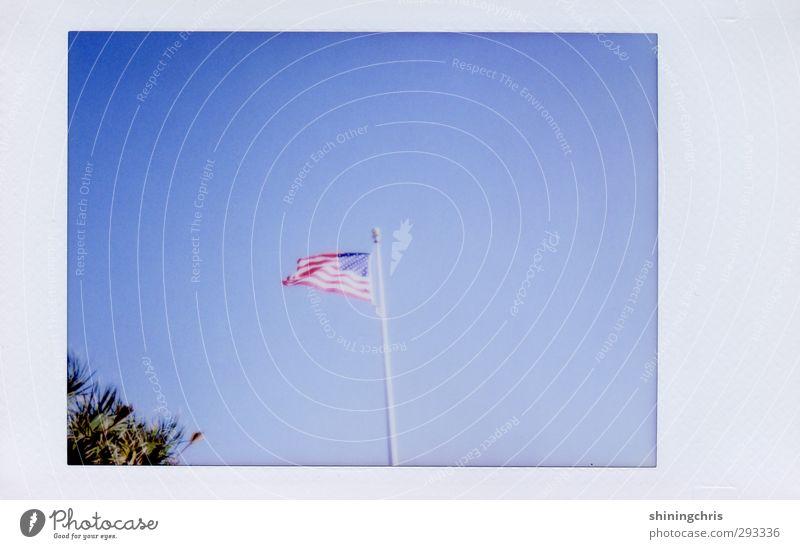 america Ferien & Urlaub & Reisen Freiheit Himmel Wolkenloser Himmel Baum Stars and Stripes frei blau Gastfreundschaft Fahne Florida wehen Wind Gedeckte Farben