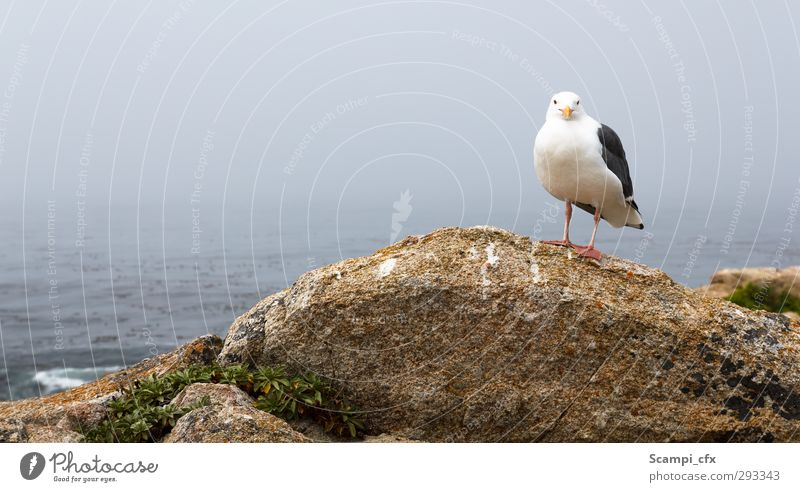 Möwe an der Küste Natur Meer Tier ruhig Umwelt Freiheit Horizont natürlich Vogel fliegen Wildtier Zufriedenheit frei Perspektive Zukunft