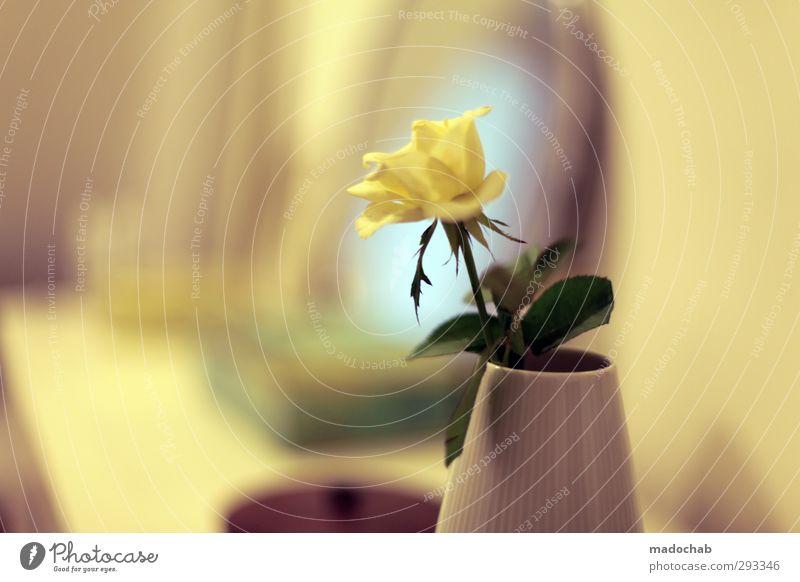Durch die gelbe Brille - Rose in Vase romantisch Valentinstag schön Blume Erholung ruhig Liebe Gefühle Innenarchitektur Stil Glück Lifestyle Wohnung träumen