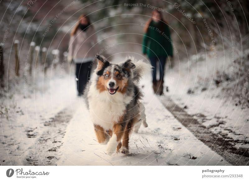 Der beste Freund des Menschen (2) feminin Junge Frau Jugendliche Erwachsene 18-30 Jahre Natur Winter Schnee Wald Tier Haustier Hund Freude Glück Fröhlichkeit