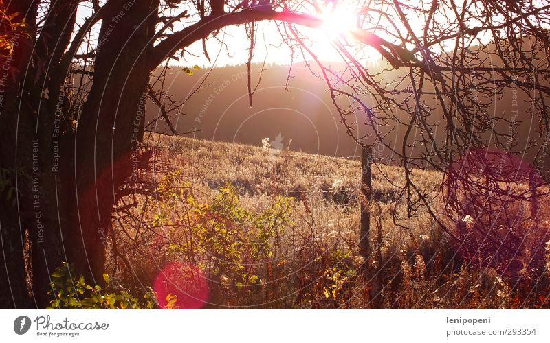 dunsown Zufriedenheit ruhig Ferien & Urlaub & Reisen Ausflug Freiheit Natur Landschaft Herbst Schönes Wetter Pflanze Baum Wiese Hügel Wege & Pfade genießen
