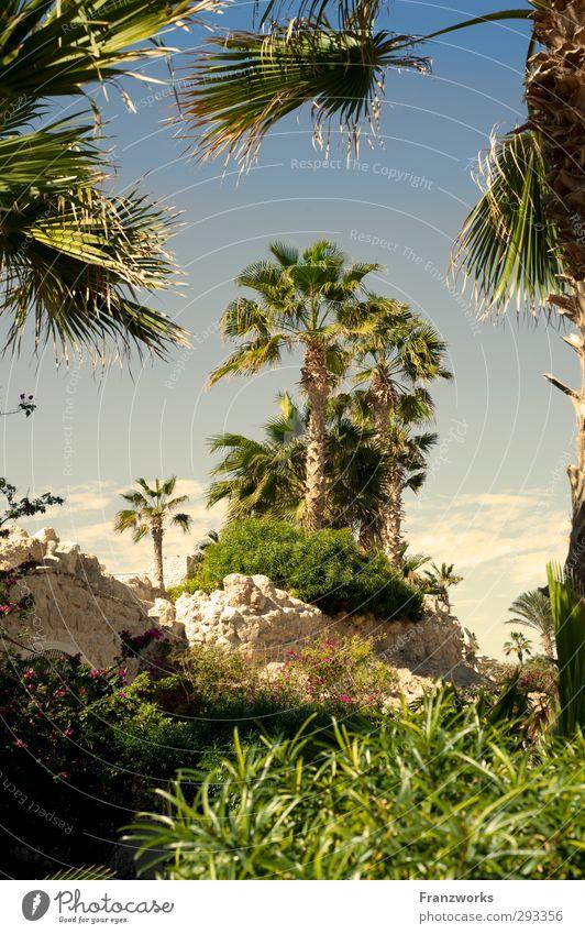 Lilith & Adam hinter Palmen exotisch harmonisch ruhig Meditation Ferien & Urlaub & Reisen Abenteuer Ferne Safari Expedition Sonne Insel Umwelt Natur Pflanze