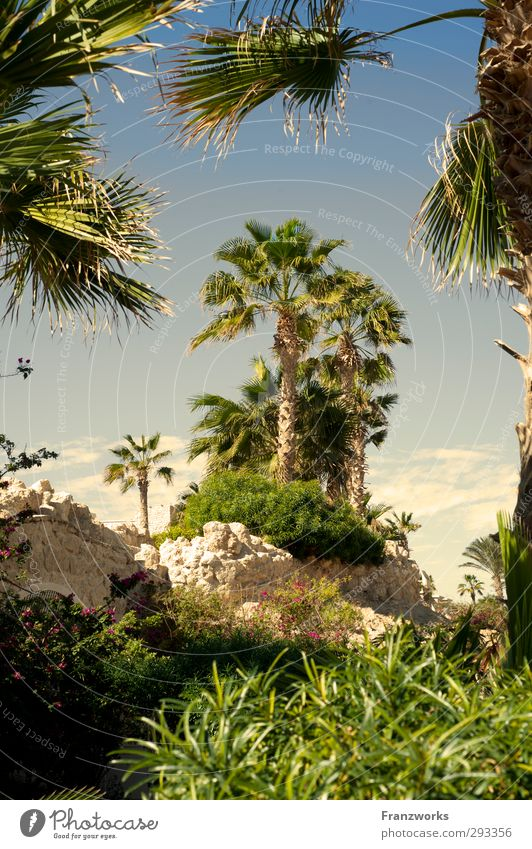 Lilith & Adam hinter Palmen Natur Ferien & Urlaub & Reisen Pflanze Sonne ruhig Strand Erholung Umwelt Ferne Küste Felsen Wetter Klima Insel Schönes Wetter
