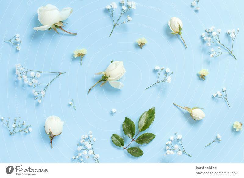 Blumen auf hellblauem Hintergrund Design Dekoration & Verzierung Valentinstag Muttertag Hochzeit Frau Erwachsene Rose oben Kreativität romantisch hell-blau