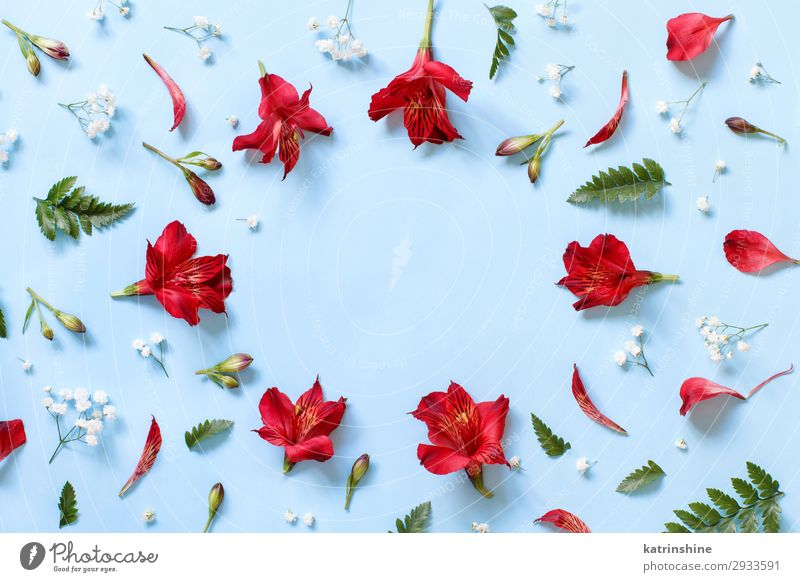 Frau rot Blume Erwachsene Textfreiraum oben Design Dekoration & Verzierung Kreativität Hochzeit Mutter Entwurf Valentinstag Muttertag hell-blau geblümt