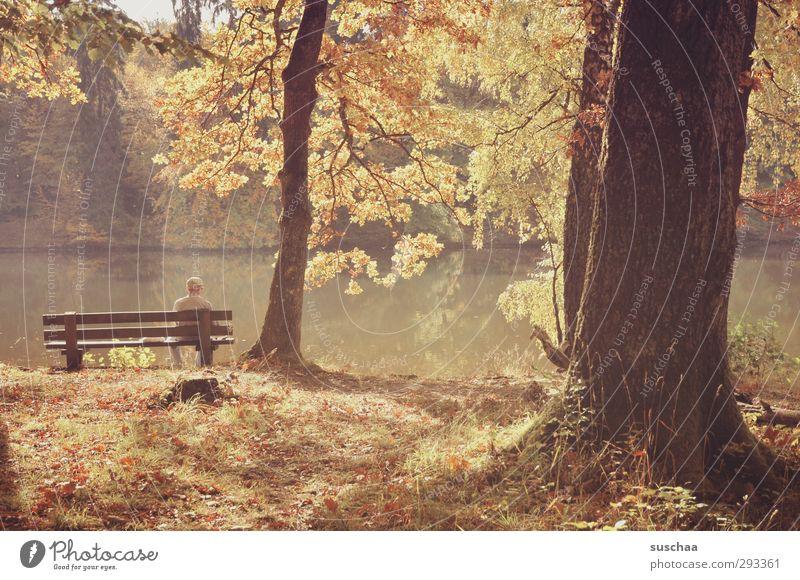waiting Umwelt Natur Landschaft Herbst Schönes Wetter Park Wald Seeufer Holz braun Zufriedenheit Idylle Baumstamm Parkbank Mensch Wasser Blätter Laub
