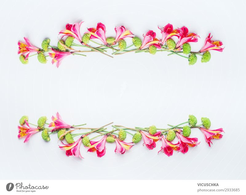 Tropische exotische Blumen Rahmen auf weiß Stil Design Sommer Feste & Feiern Natur Pflanze Frühling Blüte Dekoration & Verzierung Blumenstrauß Fahne trendy rosa
