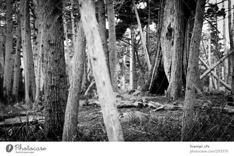 Baumhöhle Natur Einsamkeit ruhig Wald dunkel Gras Freiheit Sträucher Abenteuer Urelemente Hoffnung Ewigkeit geheimnisvoll gruselig entdecken