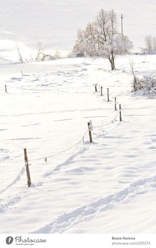 Ganz in Weiß Ferien & Urlaub & Reisen Winter Schnee Winterurlaub Berge u. Gebirge Natur Landschaft Wetter Eis Frost Hügel Wege & Pfade frieren ästhetisch frisch