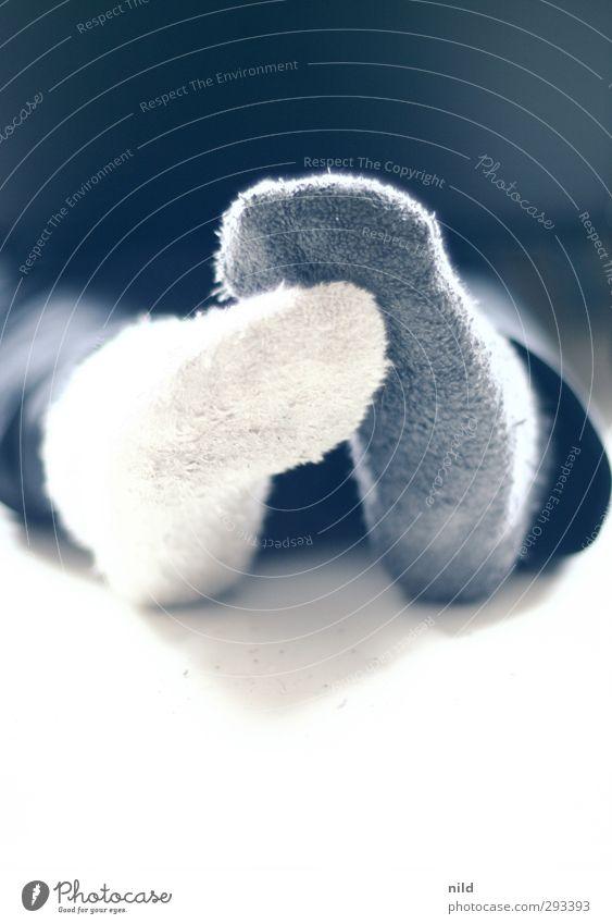 Schwarze Schafe Mensch Jugendliche blau weiß Winter ruhig schwarz Erholung Erwachsene Leben 18-30 Jahre Fuß außergewöhnlich Wohnung Häusliches Leben Bekleidung