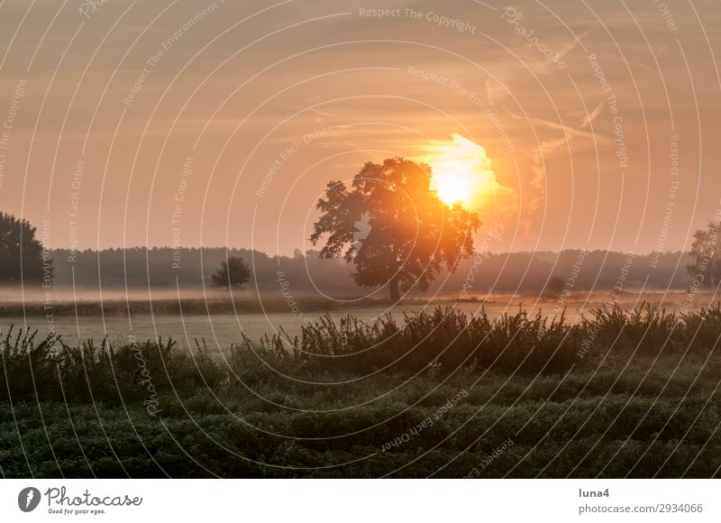 Sonnenaufgang im Frühnebel ruhig Umwelt Natur Landschaft Herbst Wetter Nebel Baum Wiese Feld Wald gelb grün rot Stimmung Romantik Idylle Morgennebel Dunst