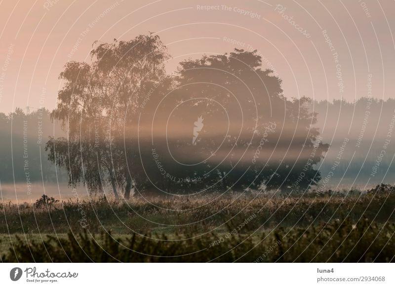 Morgennebel über einem Feld ruhig Umwelt Natur Landschaft Herbst Wetter Nebel Baum Wiese Wald grün rot Stimmung Romantik Idylle Dunst Nebelbank Atmosphäre